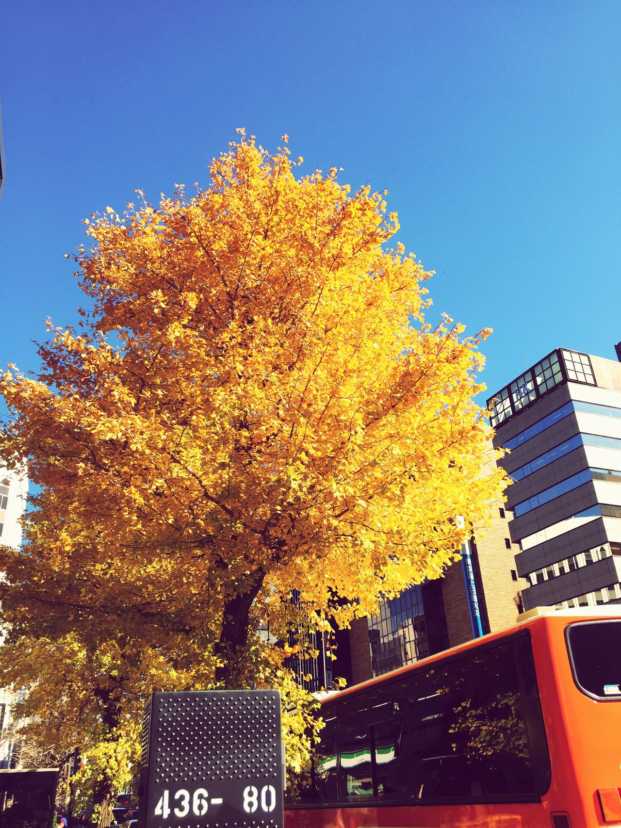 Building Exterior Tree Built Structure Architecture City Clear Sky Change Autumn Low Angle View Outdoors No People Day Sky Skyscraper Nature Outdoor Photography Street Photo Autumn Freshness Tree Clear Sky Yellow Beauty In Nature Nature Japanese Town