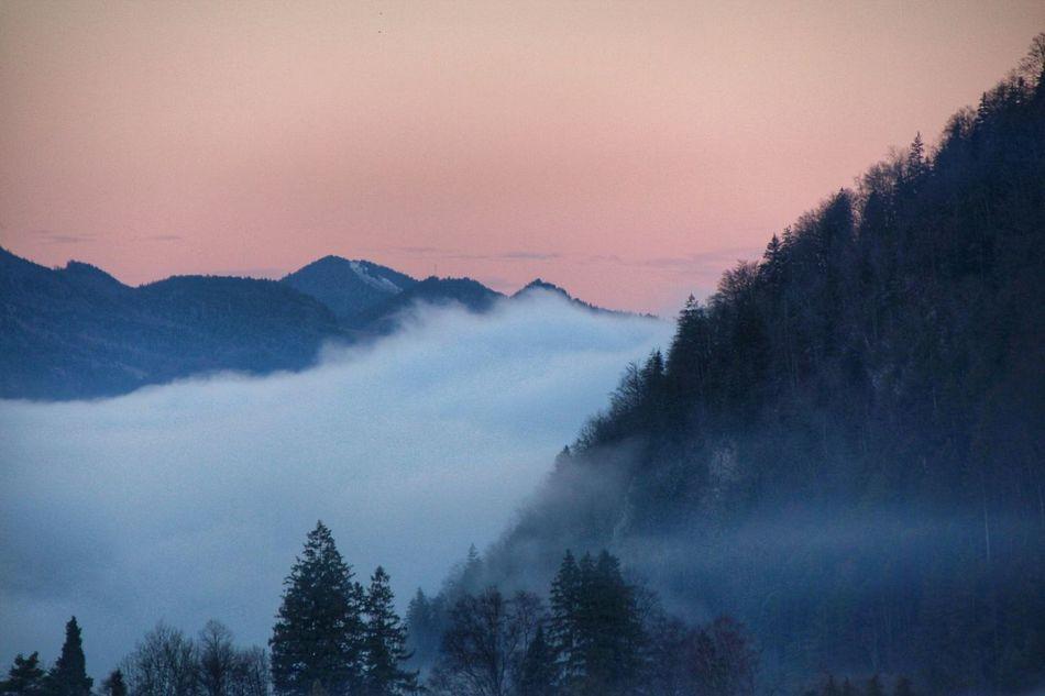 good morning :) Foggy Morning EyeEm Nature Lover Misty Captured Moment