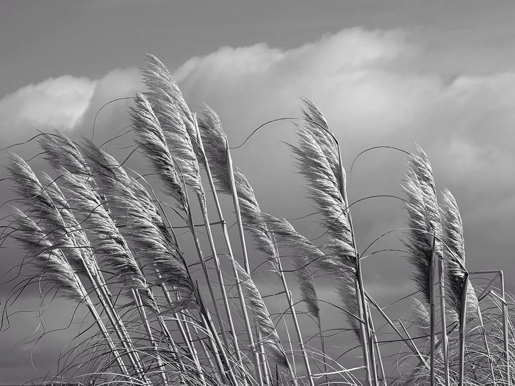 Windy Day A Little Windy Grass Weather Pro: Your Perfect Weather Shot  EyeEm Nature Lover Nature Nature_collection Blackandwhite Black And White Clouds And Sky Beach