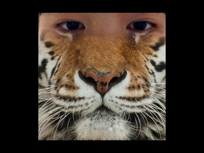 some day,I will be a tiger.