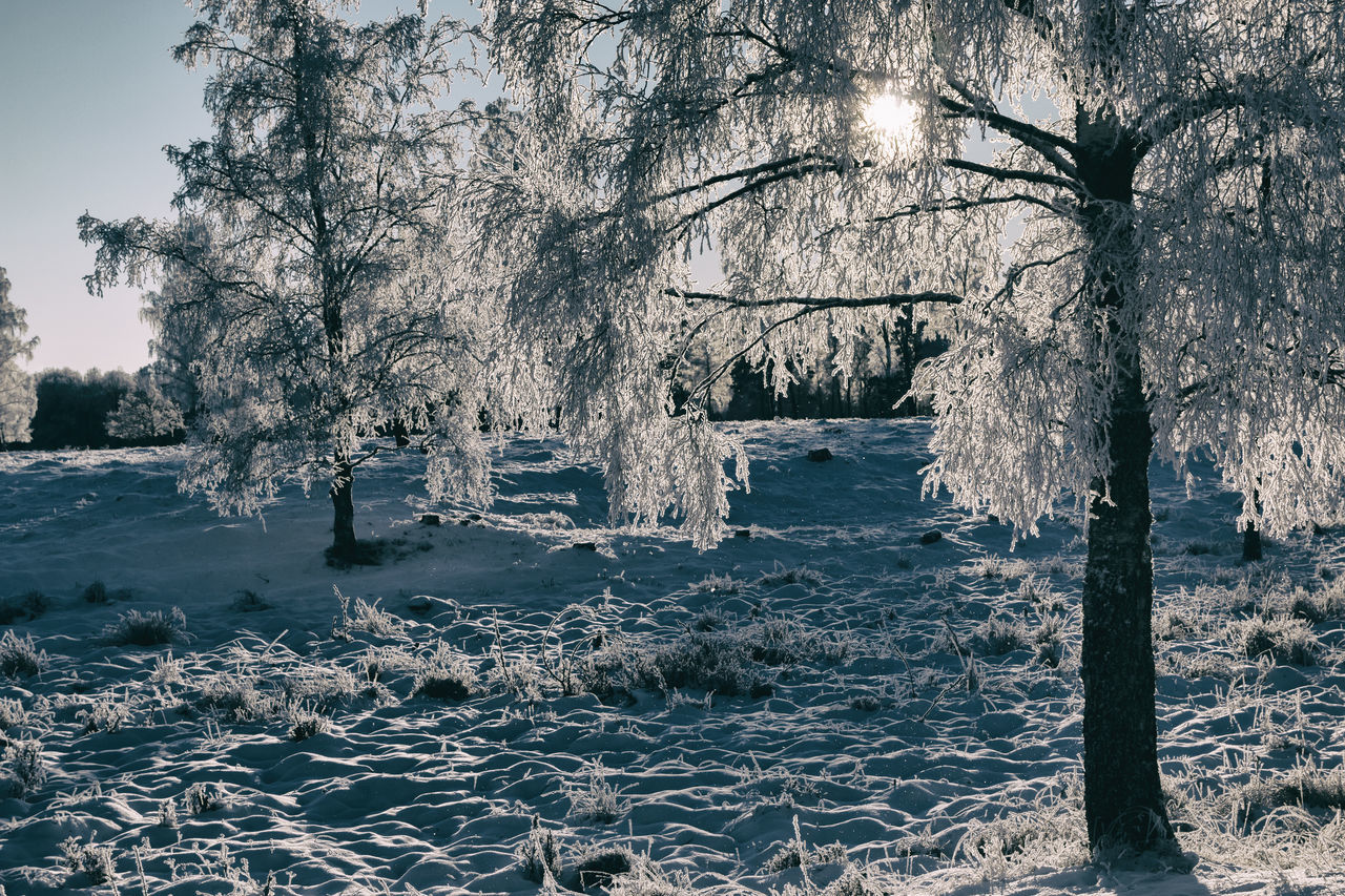 Beauty In Nature Beauty In Nature Cold Temperature Exceptional Photographs Finding New Frontiers First Eyeem Photo Frost Frosty Hello World Idyllic Light And Shadow Nature Nature No People Outdoors Scenics Tranquil Scene Tranquility Tranquility Tree Tree Winter Winter Wonderland