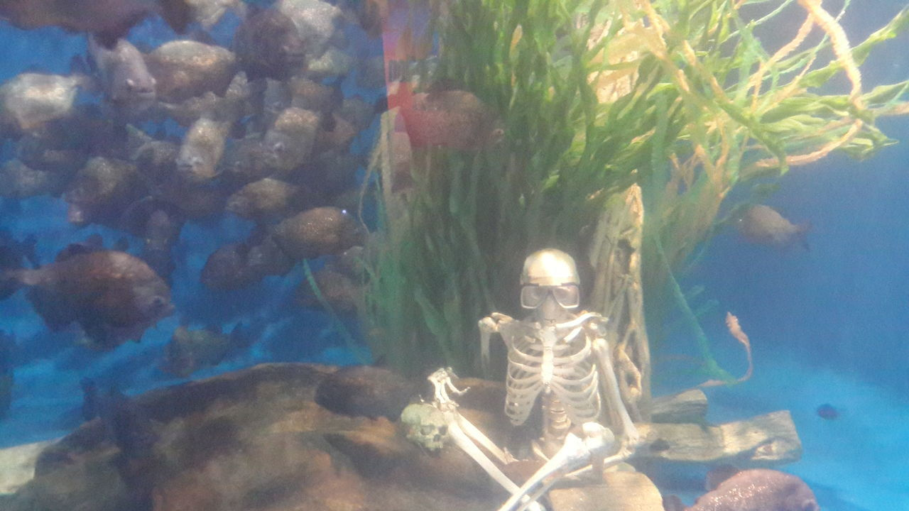 Fish Fishes Aquarium Skeleton Human Underthesea Sea Day Piranhas