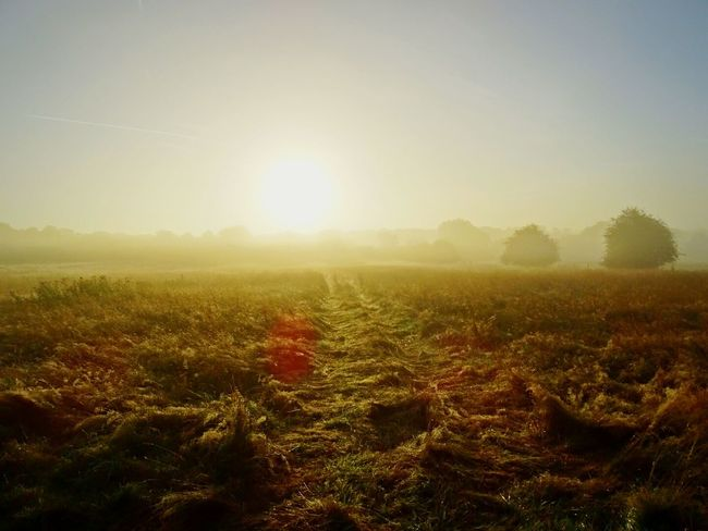 A Beautiful Morning from the Fields behind my Backyard, Eye Opener how Beautiful a Foggy Morning with Golden Corn can amazing you. 43 Golden Moments Open Field Cloudy Sunrise Misty Morning Dim Light Through The Mist Fresh Great Shot Landscape Fieldscape Fields Of Gold EyeEm Gallery Eyeem Market EyeEm Getty Collection Eyeem Photography The Great Outdoors - 2017 EyeEm Awards