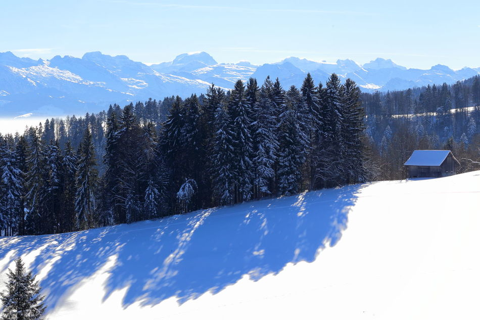 Swiss winterscape. Alps Blue Shadow Cold Temperature Diagonal Enjoying Life Eye4photography  Betterlandscapes Miles Away Forest Heile Welt Hut Landscape Light And Shadow Mountain Mountain Range No People Pristine Scenics Ski Holiday Snow Snowcapped Mountain Switzerland Winter Winterscapes Zürcher Oberland