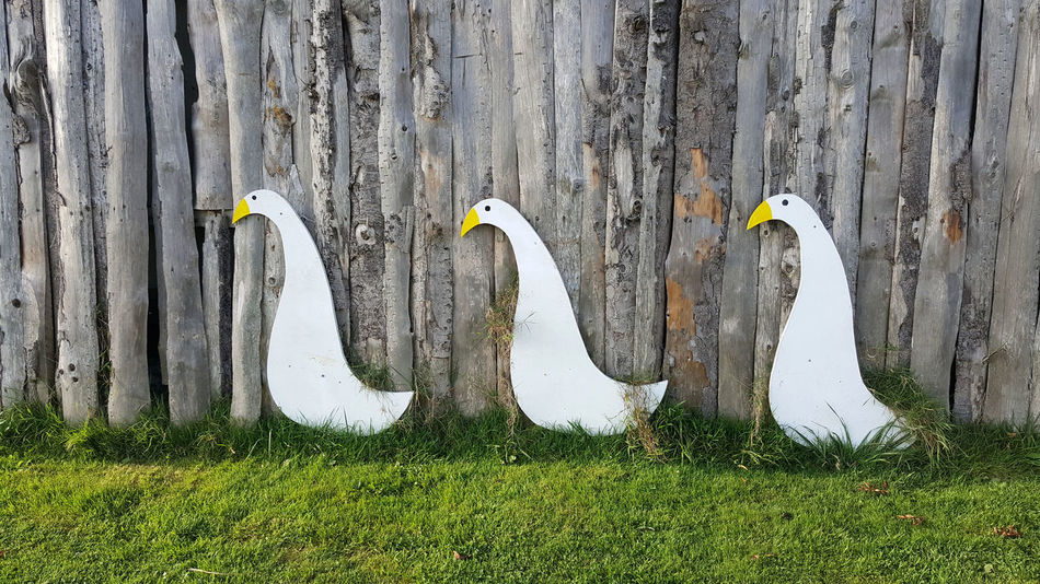 Geese or ducks? I can't tell. Animal Themes Bird Everyday Art Grass No People Outdoors Three In A Row Wood - Material Wooden Wall