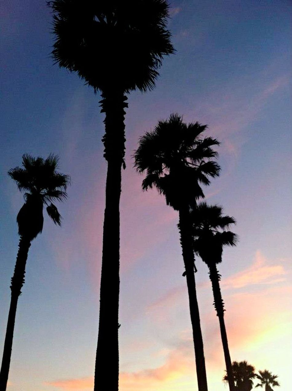 Palm Tree Tree Silhouette Sunset Date Palm Tree Low Angle View Nature Beauty In Nature California No People Scenics Clear Sky Tranquility Sky Tranquil Scene Growth Outdoors Day Best Sunrises And Sunsets Huntington Beach