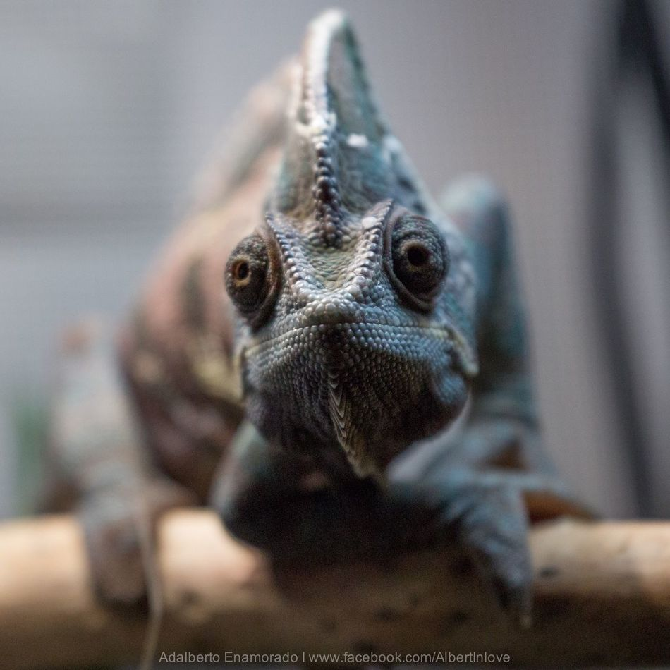 My pet.. Pascal.. Pet Nature
