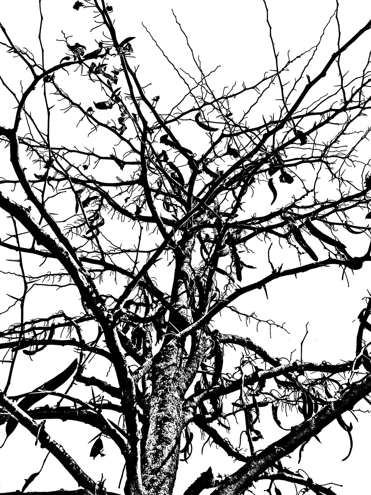 Beauty In Nature Black & White Black And White Blackandwhite Branch Contrast Day Low Angle View Nature No People Outdoors Sky Tree