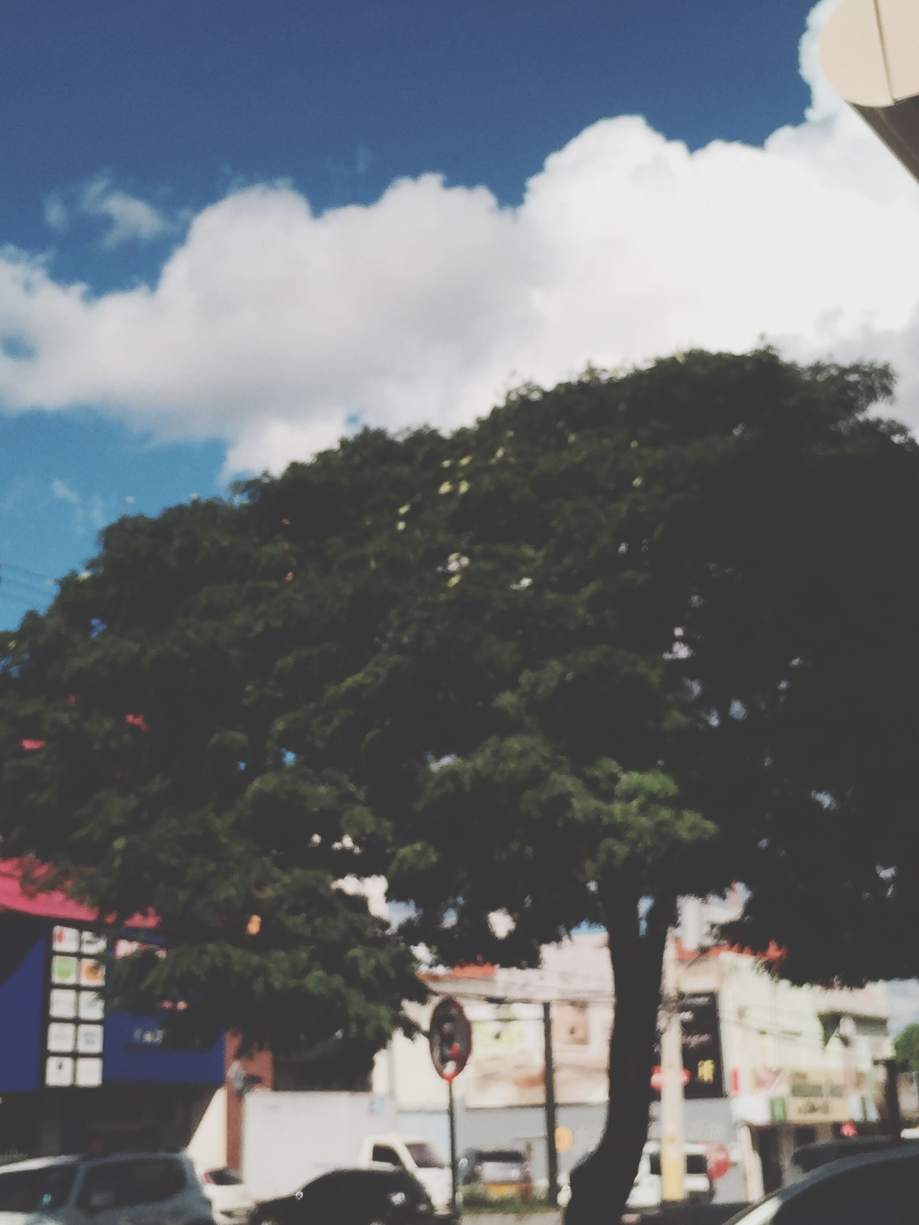 tree, sky, building exterior, built structure, architecture, cloud - sky, low angle view, cloud, outdoors, day, men, street, city, lifestyles, growth, street light, house, sunlight