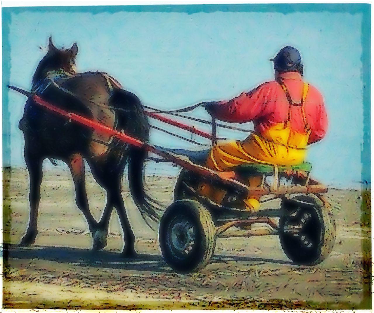 Horse Outdoors Working Animal Men One Animal