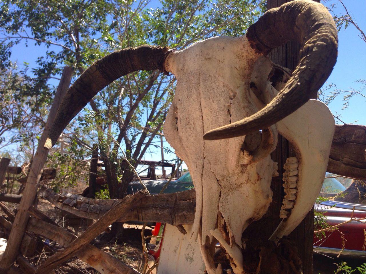Beautiful stock photos of death, Animal Bone, Animal Head, Animal Skull, Antler