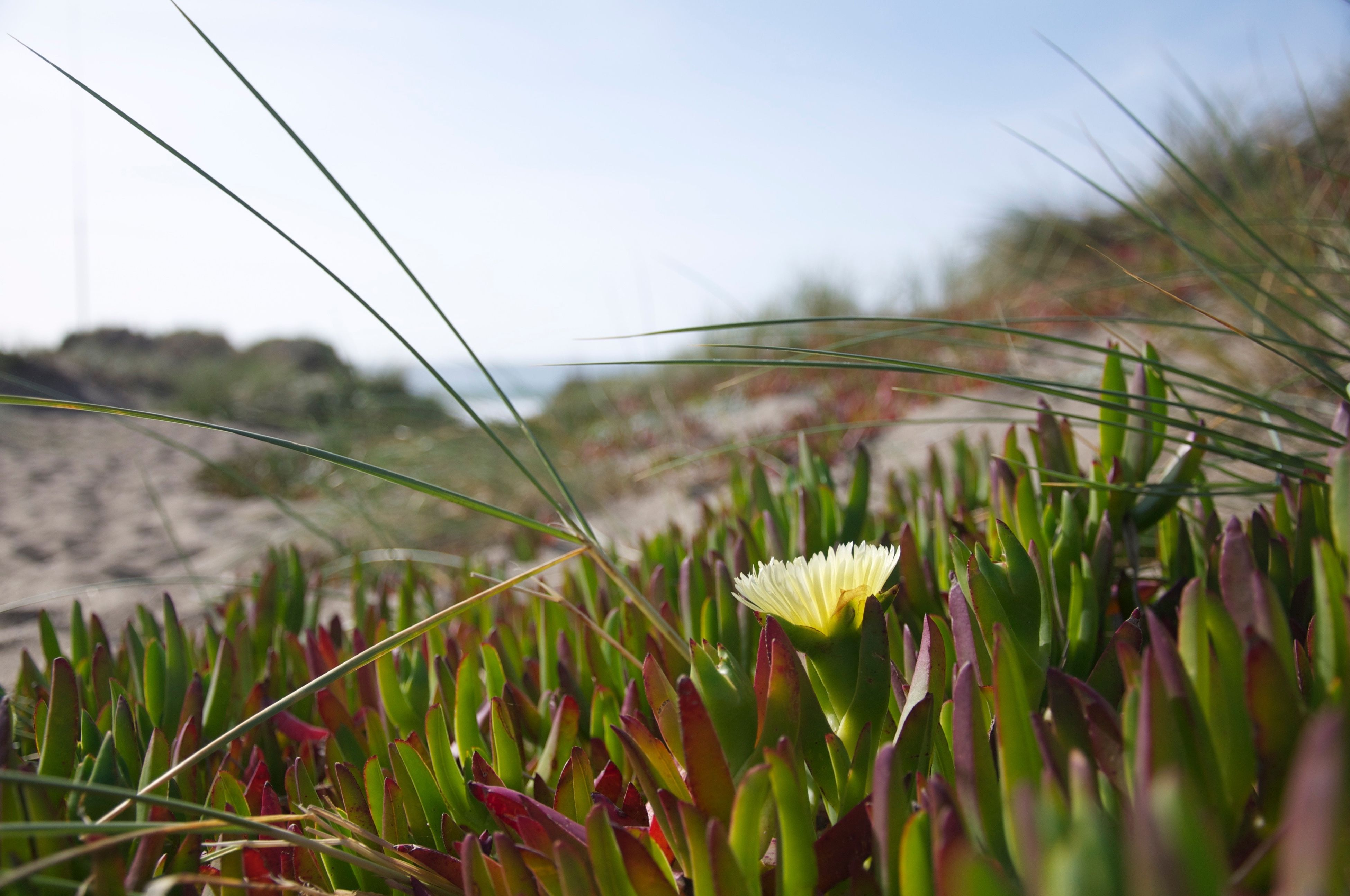 growth, grass, focus on foreground, flower, close-up, field, plant, nature, beauty in nature, freshness, green color, tranquility, fragility, scenics, tranquil scene, wildflower, day, green, surface level, outdoors, blade of grass, uncultivated, springtime, non-urban scene, mountain, remote, no people, growing, botany