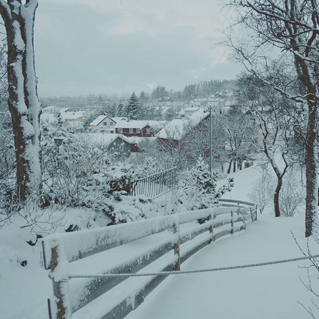 Misma foto durante el día Bodø Norge Noruega Norway Invierno DePostal Pareceundecorado Snøibodø Vintererher Chocolatecalentito Yasiquenosemeocurrenmasetiquetas