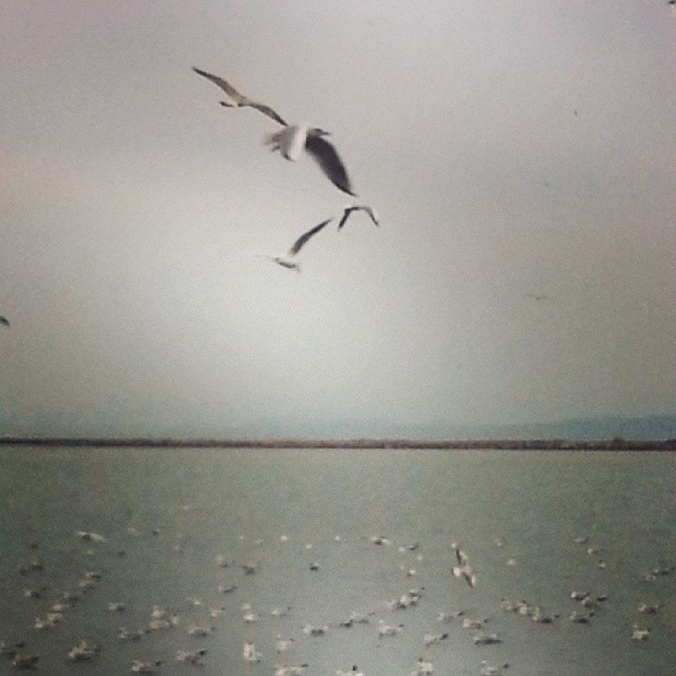 Bulutlara rağmen bazen kanatlanır hayat Bird Volki Bulut Rain ksk martı instalike instagram instafollow instaturkey instatagsapp