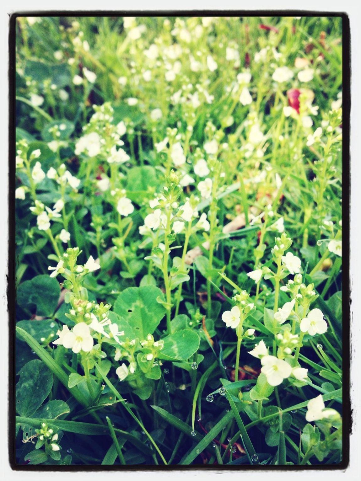 Flowers,Plants & Garden