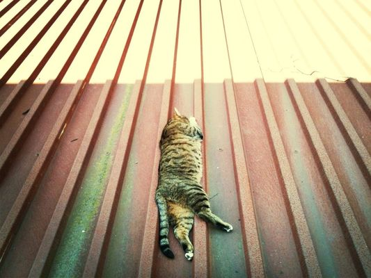 sleeping cat at aplanat Mietstudios by Pettit