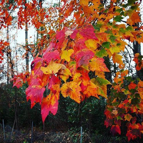 Fall! Season  Fall Nexus6P Latepost Columbia SC Withfilter