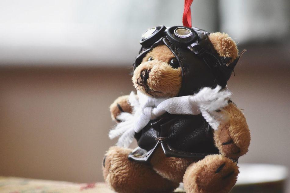 Beautiful stock photos of bear, Animal Representation, Bear, Childhood, Close-Up