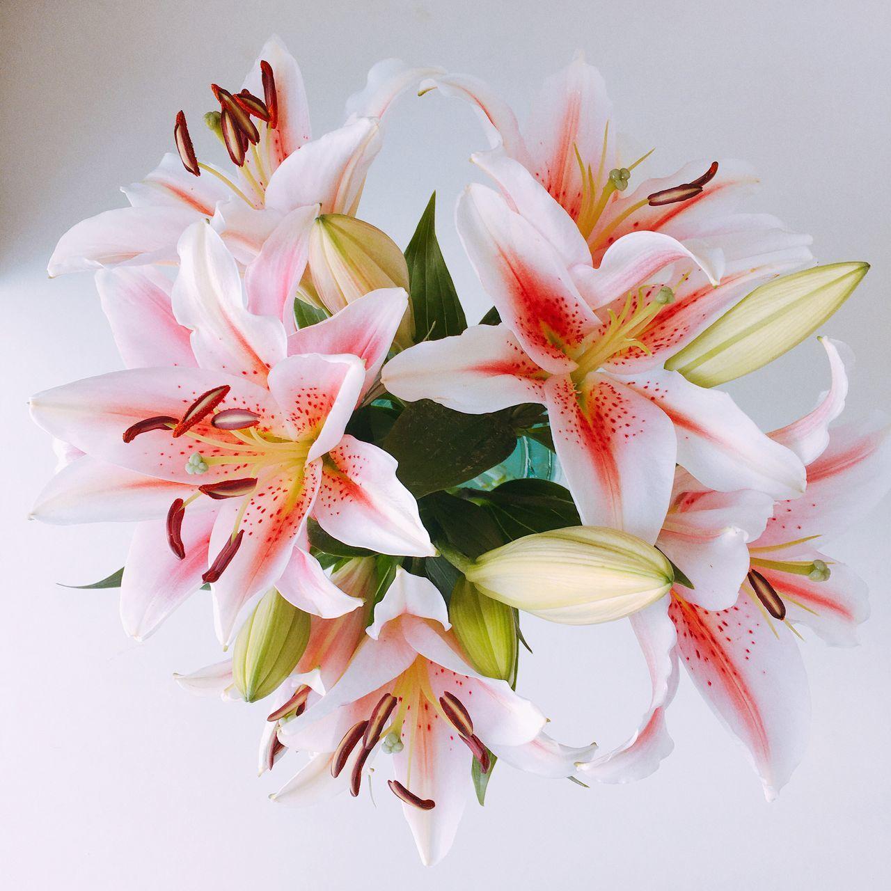 Fafa Flower Flowerporn Lily