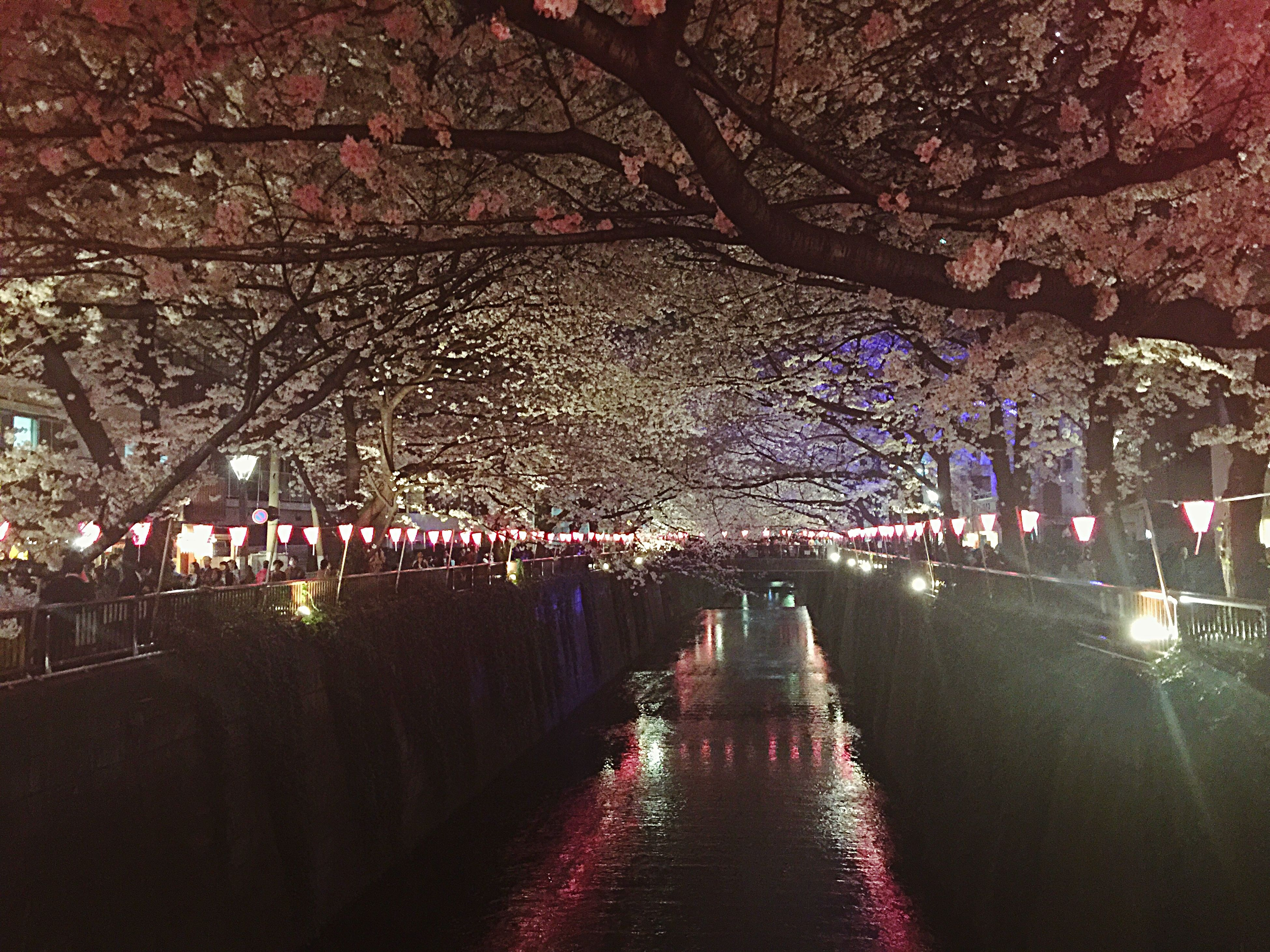 tree, the way forward, illuminated, night, diminishing perspective, large group of people, park - man made space, street, lighting equipment, footpath, water, treelined, outdoors, incidental people, nature, road, reflection, vanishing point, branch