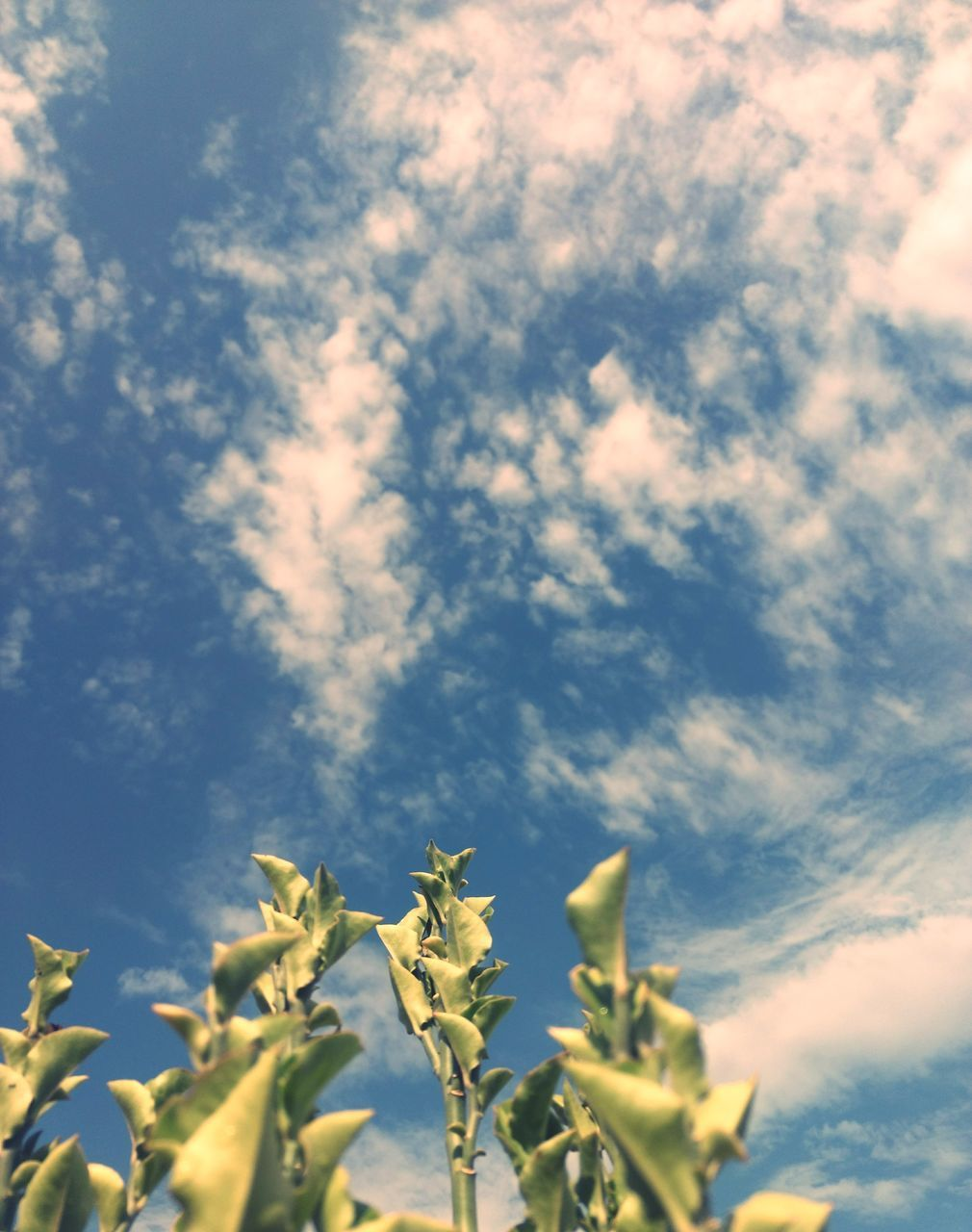 growth, nature, sky, plant, no people, low angle view, cloud - sky, beauty in nature, outdoors, day, tranquility, agriculture, scenics, fragility, flower, close-up, freshness