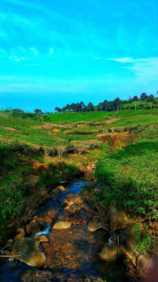 The River Blue Sky Landscape Field Nature Green Color Beauty In Nature Vacations Outdoors Day Green Indonesian Street (Mobile) Photographie Beauty In Nature Jakarta Street Photography