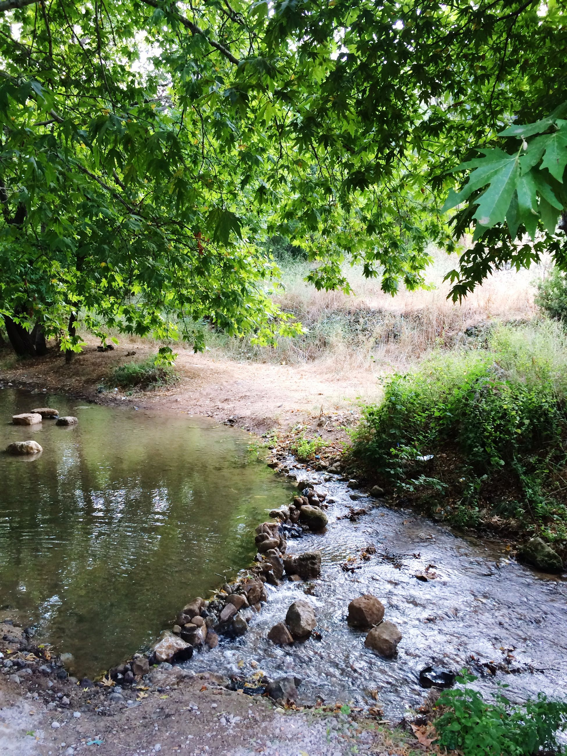 water, tree, green color, growth, tranquility, stream, nature, tranquil scene, beauty in nature, scenics, river, plant, rock - object, forest, flowing, branch, day, outdoors, waterfront, idyllic
