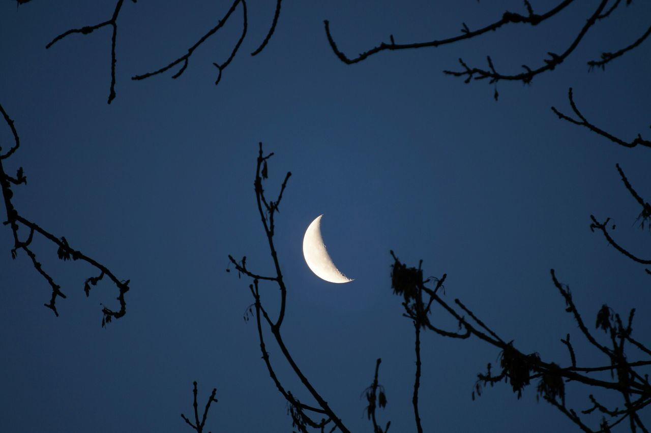 moon, astronomy, nature, beauty in nature, low angle view, planetary moon, half moon, crescent, sky, tranquility, scenics, silhouette, night, outdoors, bare tree, no people, branch, tree, clear sky, space