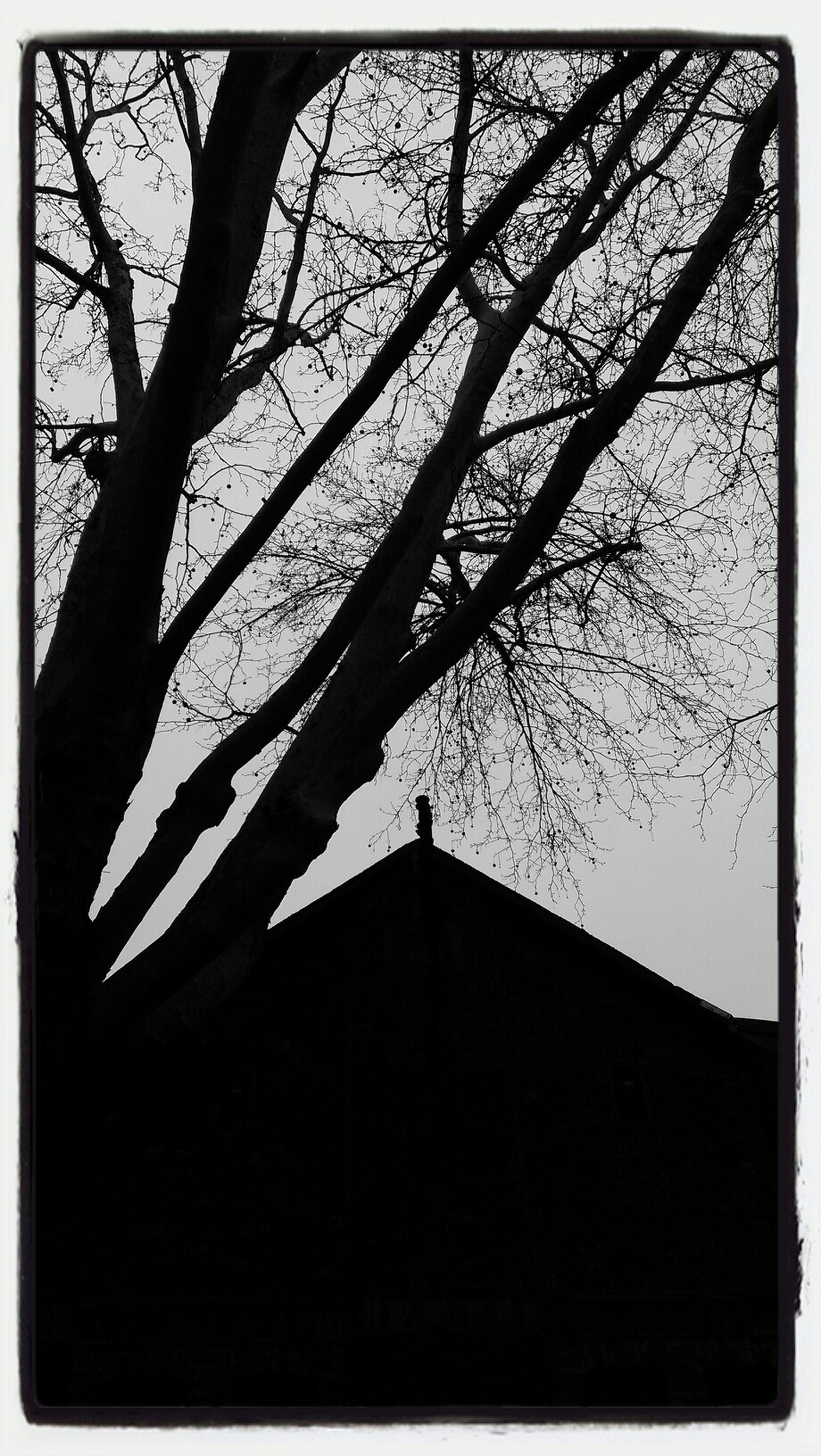 transfer print, building exterior, auto post production filter, architecture, built structure, bare tree, low angle view, tree, branch, sky, clear sky, silhouette, outdoors, no people, day, nature, building, tower, religion, church