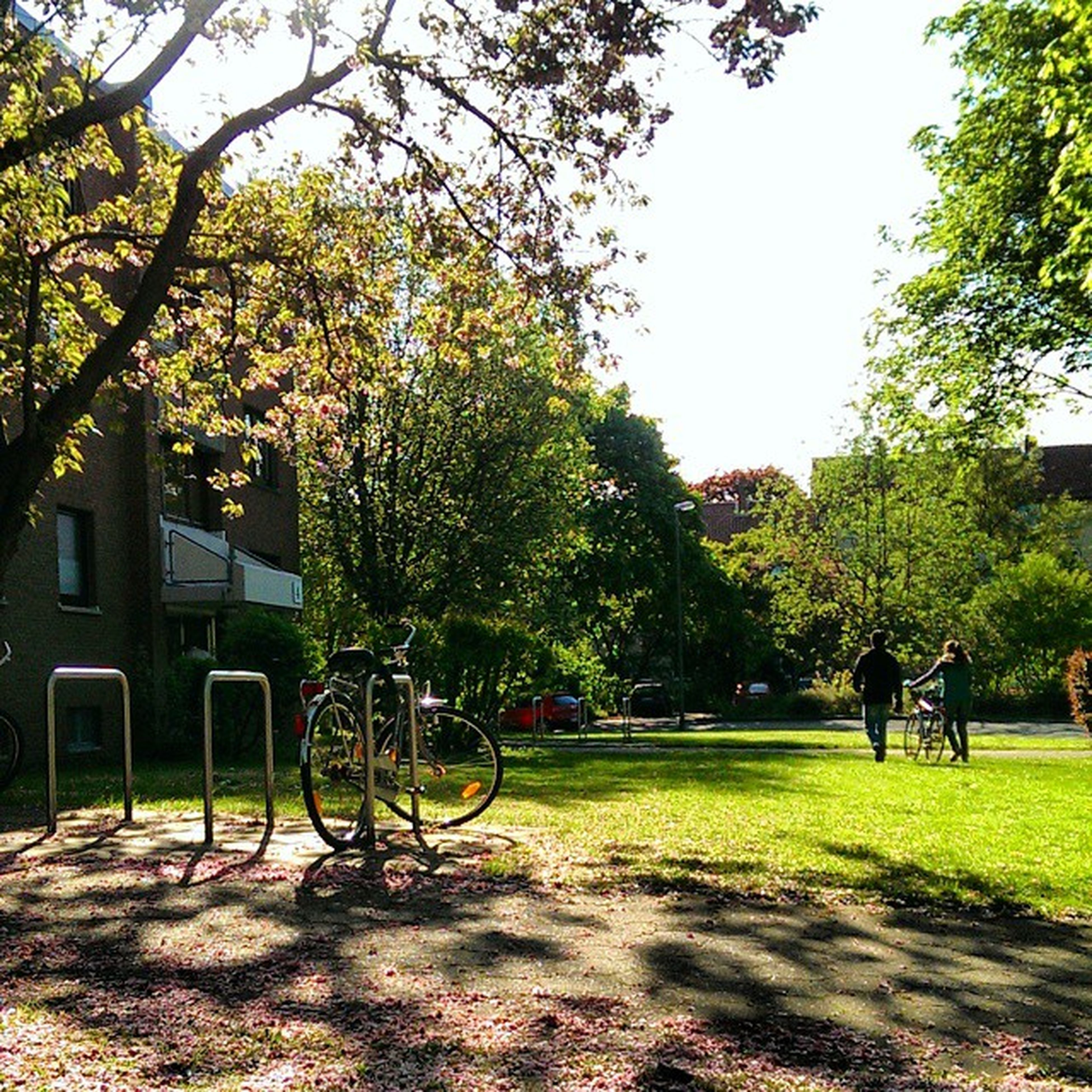 tree, grass, park - man made space, green color, park, bicycle, sunlight, growth, shadow, men, building exterior, nature, incidental people, bench, leisure activity, lawn, footpath, built structure, outdoors