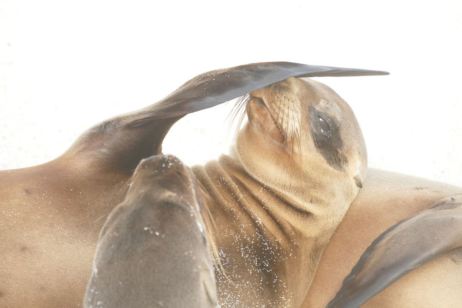 Beautiful stock photos of seal,  Animal Themes,  Animals In The Wild,  Close-Up,  Cropped