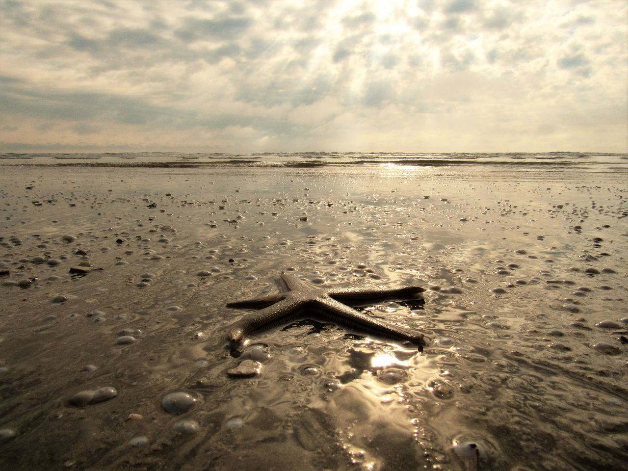 Beach Beauty In Nature Cloud - Sky Day Horizon Over Water Nature No People Outdoors Sand Scenics Sea Sky Starfish At Beach Sunset Tranquil Scene Tranquility Water