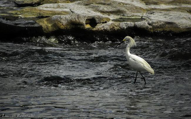 Animal Themes Animals In The Wild Bird Branca Day Garças Nature One Animal Outdoors Pedra Rio Water Zoology