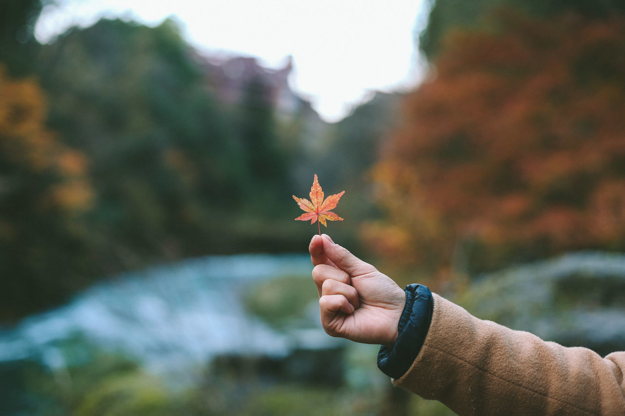 human hand, real people, one person, human body part, focus on foreground, outdoors, day, personal perspective, nature, holding, lifestyles, leaf, close-up, autumn, maple leaf, beauty in nature, tree, sky, people