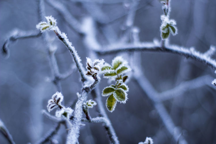 Amateurphotography Beauty In Nature Close-up Cold Cold Days Cold Temperature Cold Winter ❄⛄ Day Green Green Color Nature Nature Nature Photography Nature_collection Nature_perfection Naturelovers Naturephotography No People Outdoors Snow Tree Winter