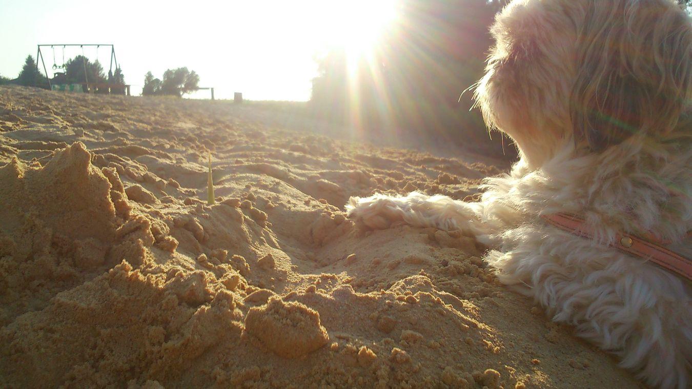 I Love My Dog❤ Sand Art Relax