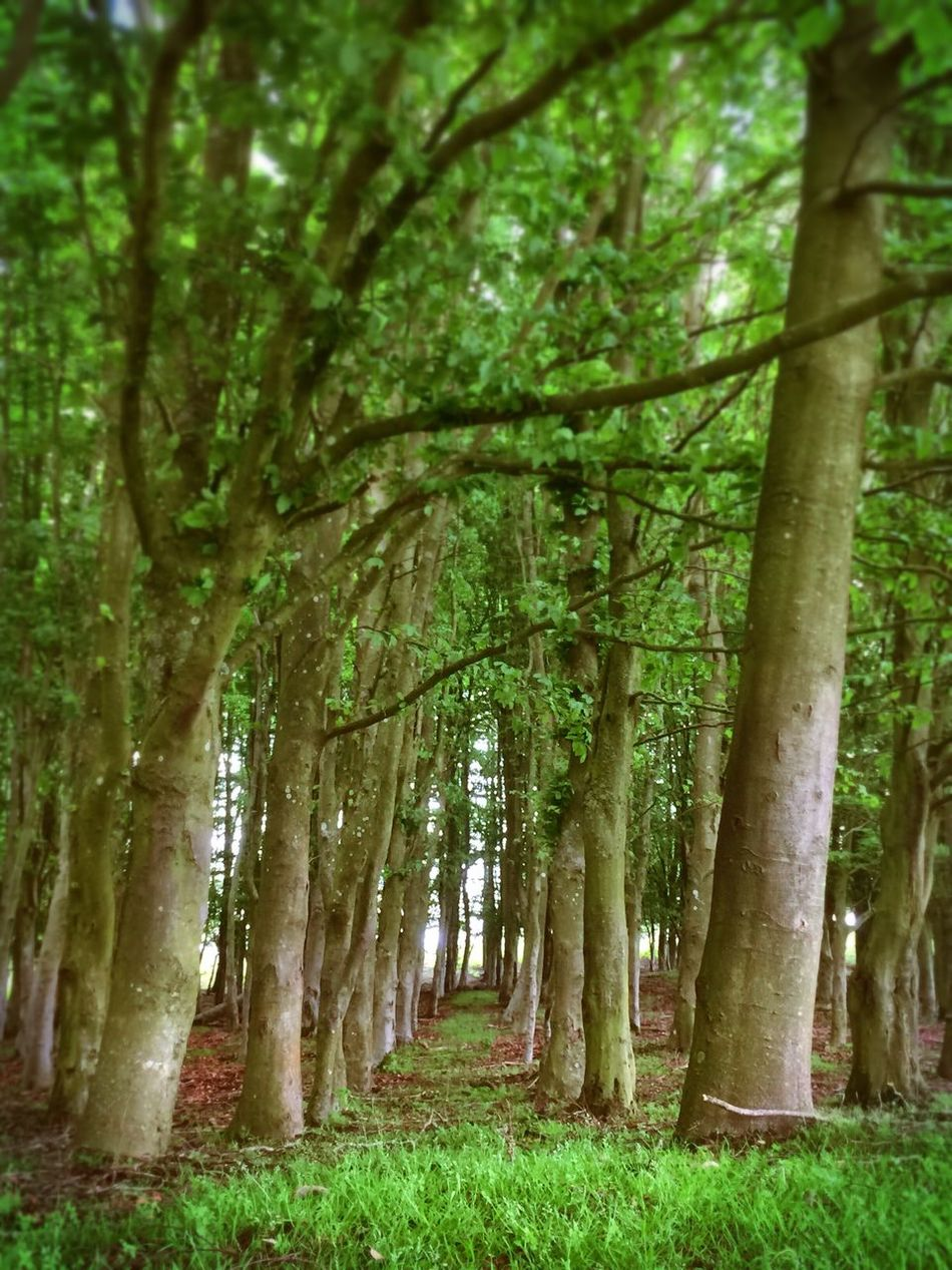 Eyem Nature Lovers  Outdoors Wood Walks Trees Tree Line Tree Tunnel New Forest, Hampshire. UK New Forest National Park Beauty In Nature Beautiful Trees Green Wood