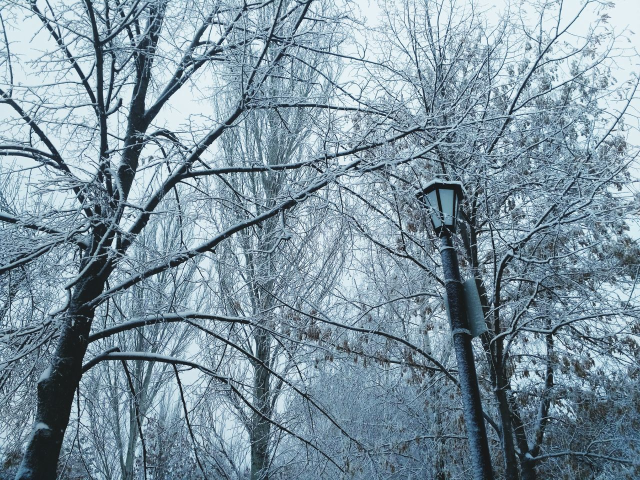 bare tree, tree, branch, nature, winter, forest, no people, day, tree trunk, outdoors, dead plant, cold temperature, low angle view, tranquility, beauty in nature, snow