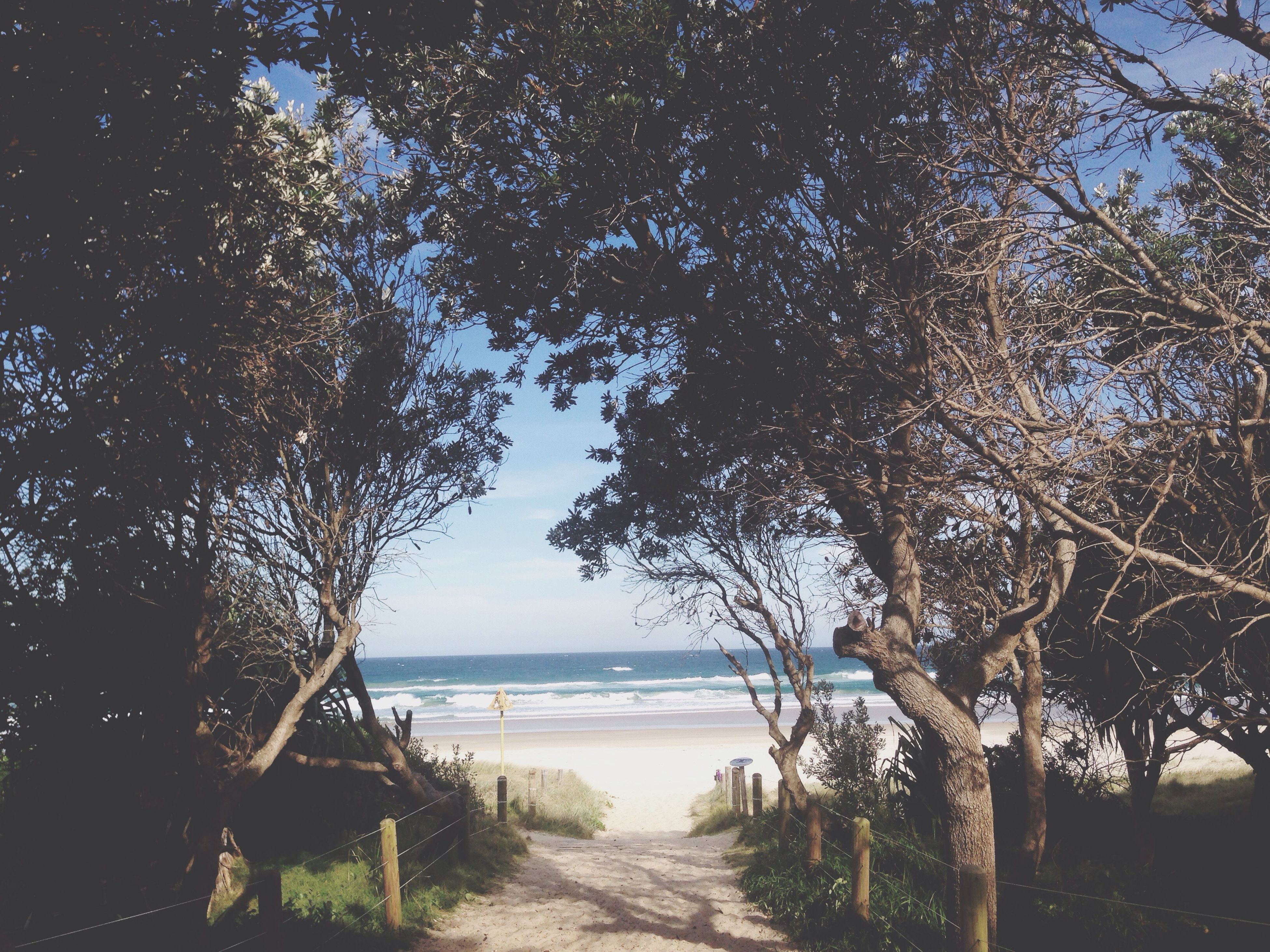 sea, water, tree, tranquility, horizon over water, tranquil scene, scenics, beach, beauty in nature, nature, sky, shore, the way forward, idyllic, branch, sand, growth, outdoors, day, sunlight