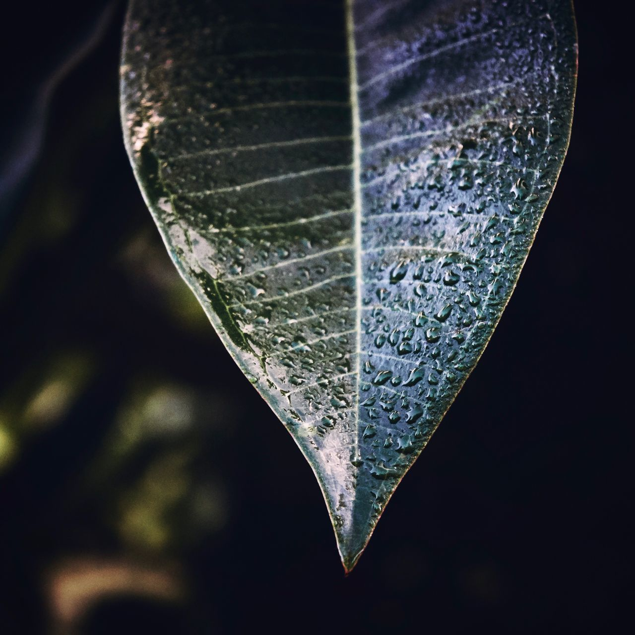 Close-up No People Black Background Day Outdoors Fragility Nature Leaf