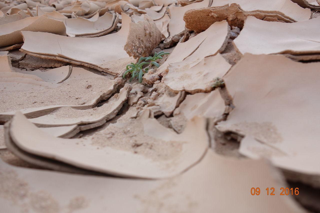 Floods Plant Desert Sony Rx100
