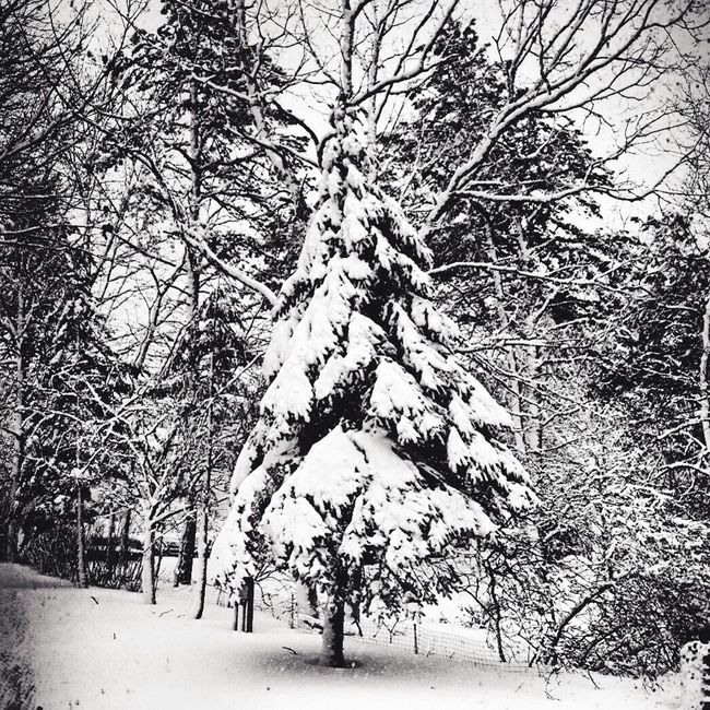 Nature_collection Beautiful Nature Landscape_Collection Planet Earth Taking Photos Blackandwhite Photography TreePorn Black & White Nature Textures Into Tthe Woods Still Life IPhoneography Winter