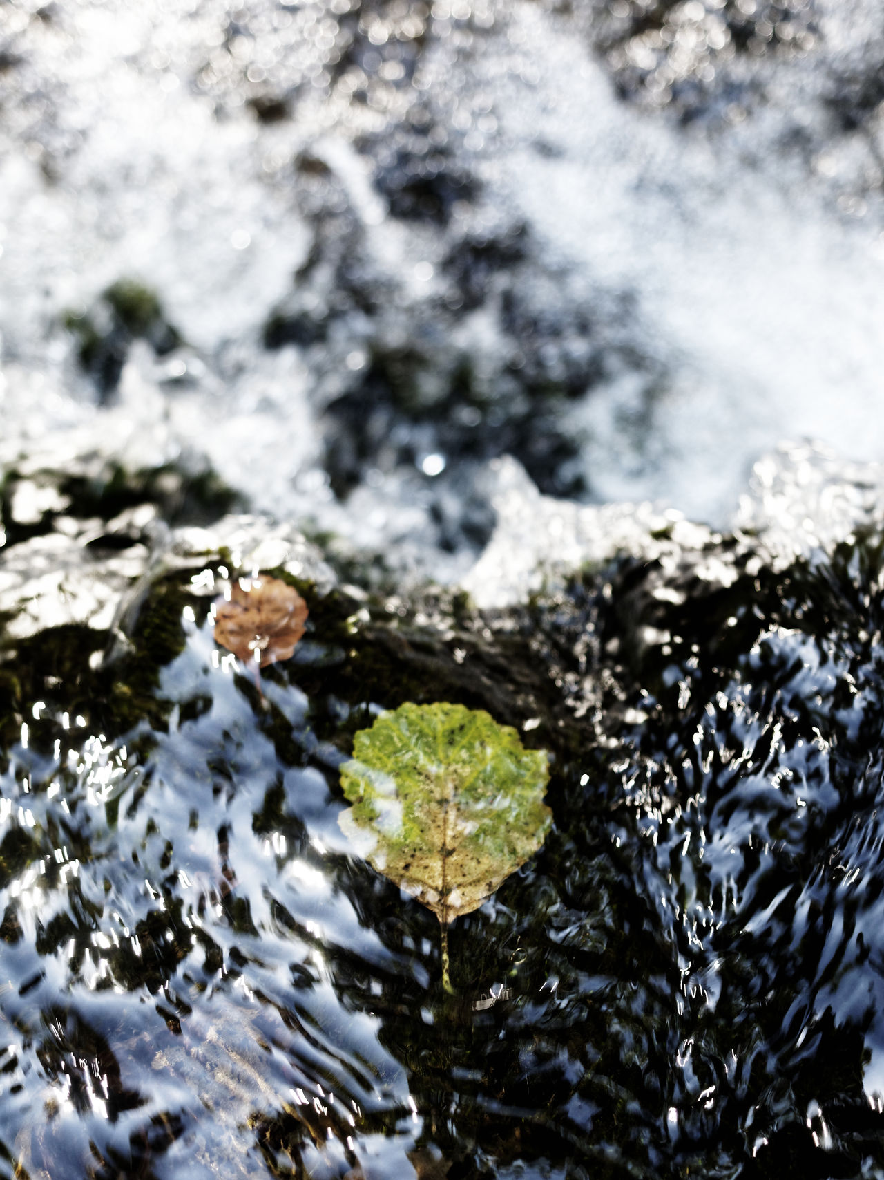 Nature Photography The Week On EyeEm Beauty In Nature Close-up Day Fragility Leaves Leaves On The Water Motion Nature Nature_collection No People Outdoors River Selective Focus Water Waterfall