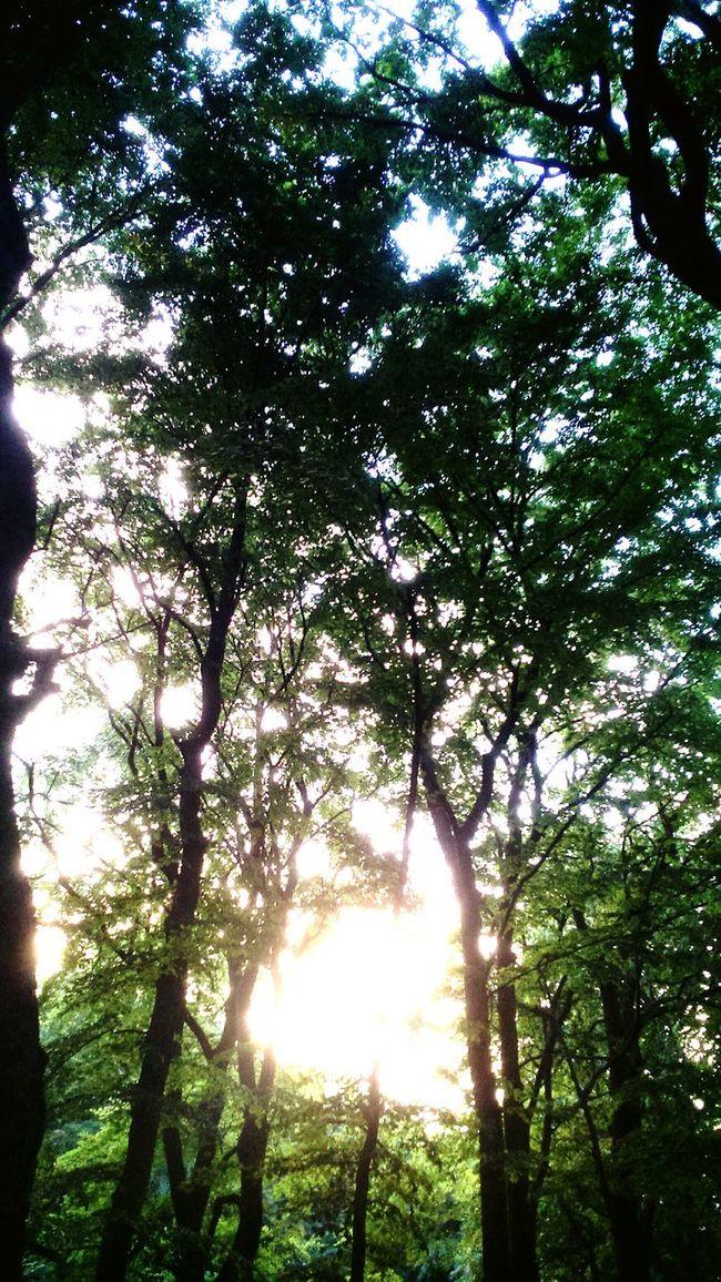 Gdansk Poland Forest Topolas Topo Trees Instant