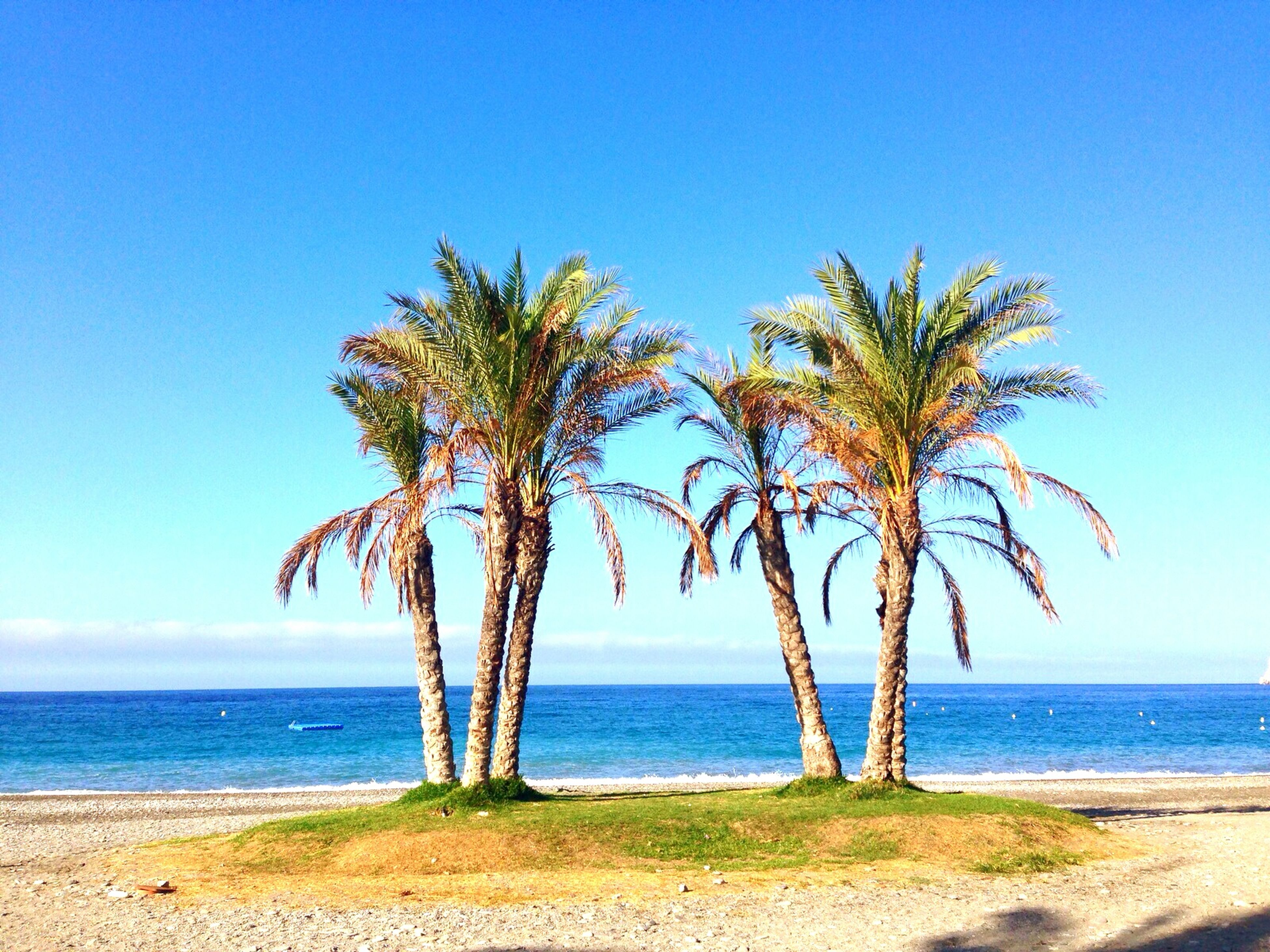 sea, horizon over water, palm tree, water, tranquil scene, tranquility, beach, tree, scenics, beauty in nature, clear sky, blue, nature, shore, tree trunk, sky, growth, idyllic, copy space, sand