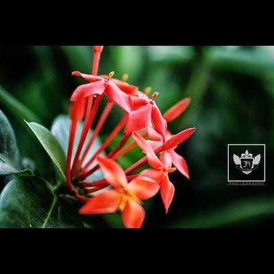 The beauty of Nature Jiniuskonxeptsphotography Photography