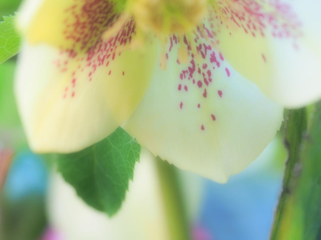EyeEmFlower Flower Flower Collection Flowers Goodmorning Goodmorning :) Goodmorning EyeEm  Goodmorning ♥ GoodMorning⛅ Hello Hello EyeEm Hello World Hello World ✌ Hello ❤ HelloEyeEm Helloworld