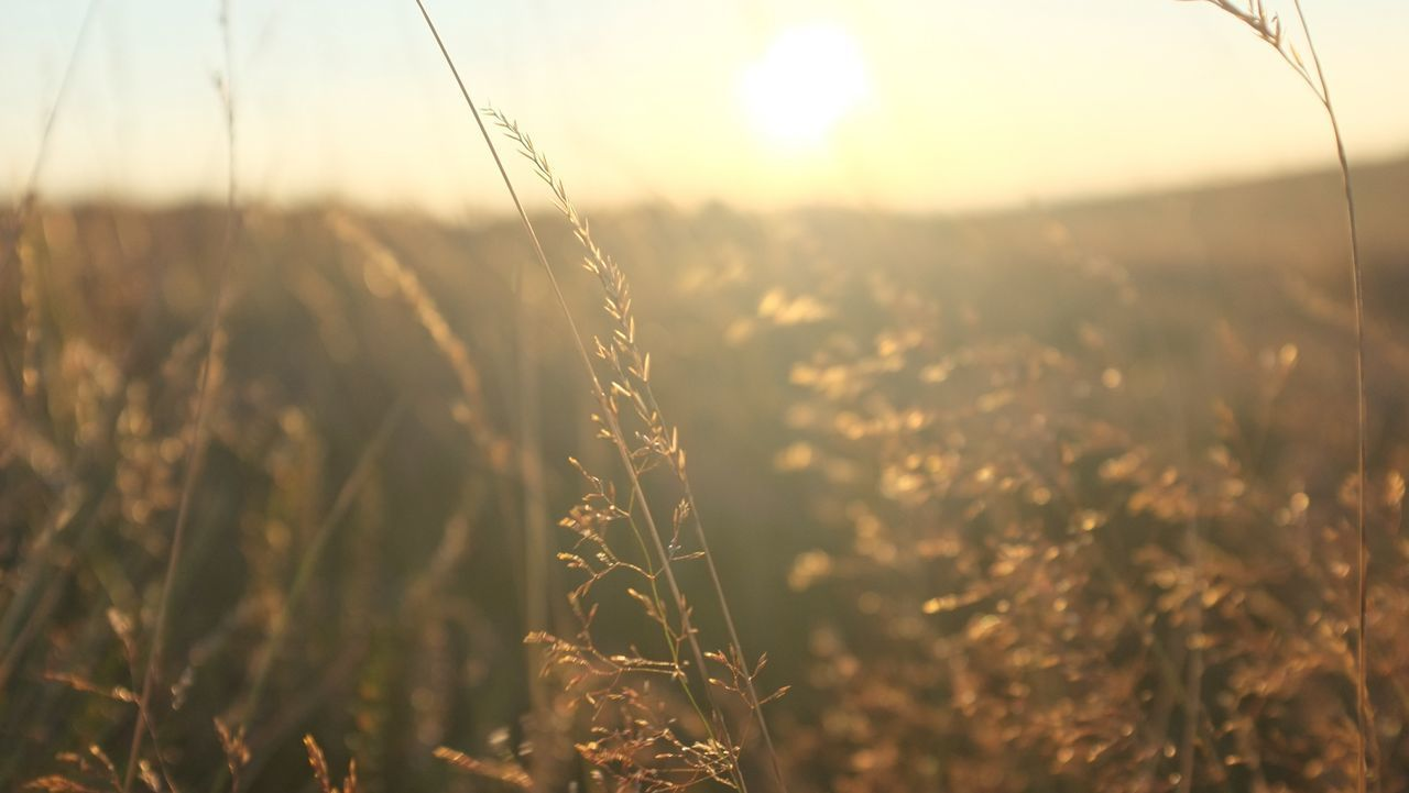 Beautiful stock photos of sunshine, Close-Up, Day, Focus On Foreground, Meadow