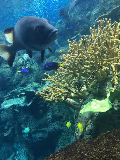 Close-up Day Beauty In Nature Animal Themes No People UnderSea Sea Life Coral Water Underwater Fish Animal Wildlife Aquarium