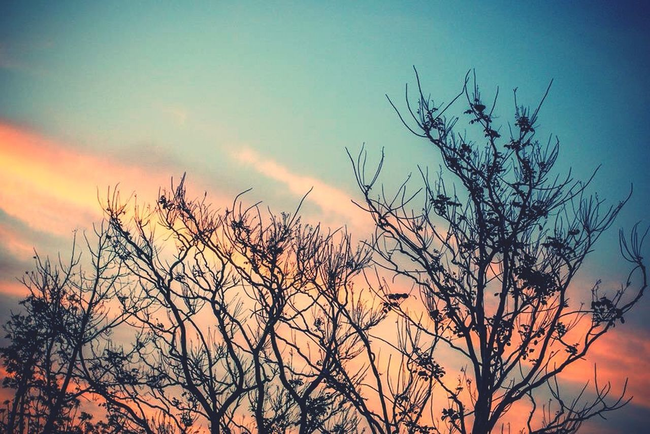 sunset, nature, beauty in nature, sky, tree, silhouette, outdoors, tranquil scene, scenics, tranquility, no people, bare tree, low angle view, plant, branch, day